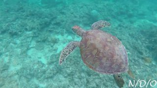 "Trip to Turtle Heaven ""Aka Island"" / Kerama Islands, Okinawa"